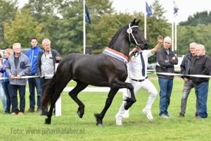 Berber-van-Brabantshof-Jehannes-x-Norbert-0771